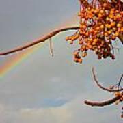 Rainbow Through Tree Art Print