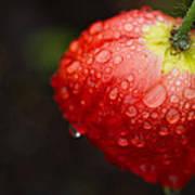 Raindrops And Poppy Art Print