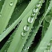 Raindrops On Blades Of Grass Art Print