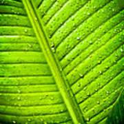 Raindrops On Green Leaf Art Print