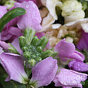 Raindrops On Purple And White Flowers Art Print