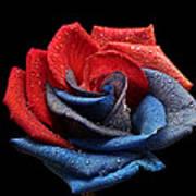 Raindrops On Rose Art Print