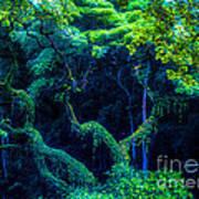 Rainforest In Waimea Valley Art Print