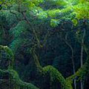 Rainforest In Waimea Valley Too Art Print