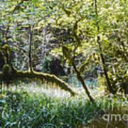 Rainforest Landscape Art Print