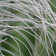 Rainforest Palm Tree Leaf Close Up  Art Print