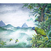 Rainforest Realm - St. Lucia Parrots Art Print