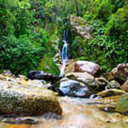 Rainforest Stream New Zealand Art Print