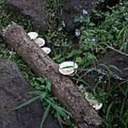 Rainforest Vegetation Moss And Fungi Art Print