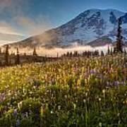 Rainier Golden Sunlit Meadows Art Print