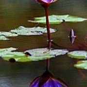 Rainy Day Lotus Flower Reflections IIi Art Print