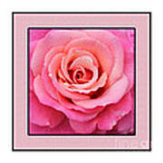 Rainy Day Rose Square Art Print