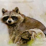 Rakish Raccoon  Art Print