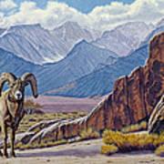 Ram-eastern Sierra Art Print