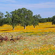 Ranch And Wildflowers And Old Implement 2am-110556 Art Print