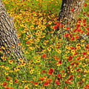 Ranch Wildflowers And Trees 2am-110522 Art Print