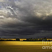 Rapefield Under Dark Sky Art Print