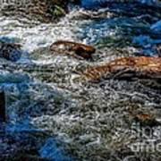 Rapids On The Gore Art Print
