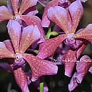 Rare Orchids Art Print