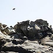 Raven Flying Over Tafoni Art Print