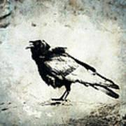 Raven On Blue Art Print