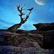 Raven On Twisted Tree With Moon Art Print