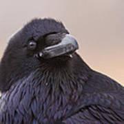 Raven Portrait Art Print