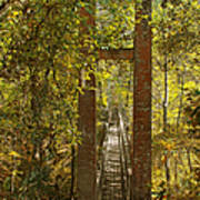 Ravine Gardens State Park In Palatka Fl Art Print