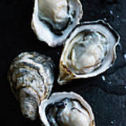 Raw Oysters Art Print
