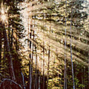 Rays Of Hope Art Print