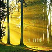 Rays Of Sun Art Print