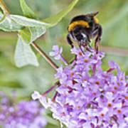 Reaching For Nectar Art Print
