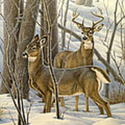 Ready - Whitetail Deer Art Print by Paul Krapf