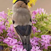 Rear View Of Female Bullfinch Standing Art Print