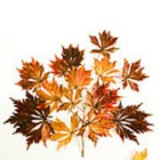 Reconstructed Full Moon Maple Art Print