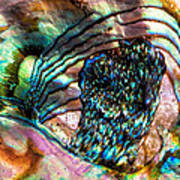 Red Abalone Art Print