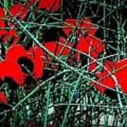 Red An Black Poppies 1 Art Print