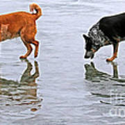 Red And Blue Heelers Art Print