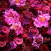 Red And Pink Cut Flowers, Close Up Art Print