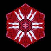 Red And White Amaryllis Iv Flower Mandala Art Print