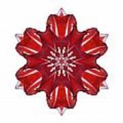 Red And White Amaryllis Vii Flower Mandala White Art Print