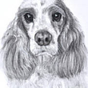 Red And White Cocker Spaniel Art Print
