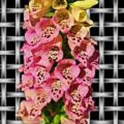 Red And Yellow Hollyhocks Art Print