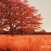 Red Autumn Art Print by Violet Gray