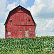 Red Barn And New Corn Art Print