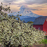 Red Barn In Hood River Pear Orchard Art Print