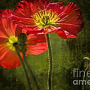 Red Beauties In The Field Art Print