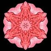 Red Begonia II Flower Mandala Art Print