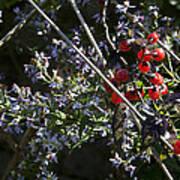 Red Berries And Violet Flowers Art Print