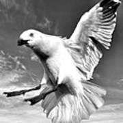 Red Billed Seagull In Black And White Art Print